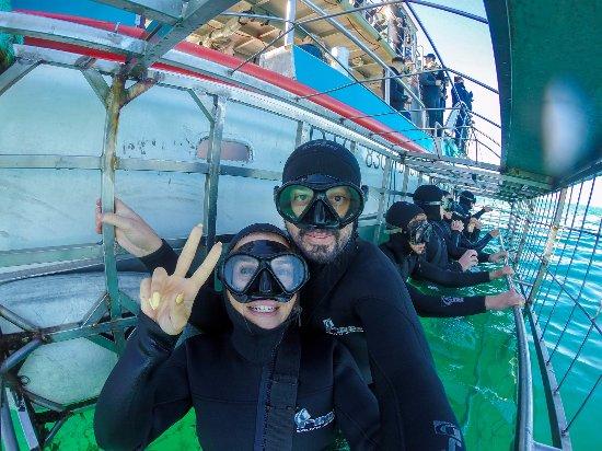 Kleinbaai, Νότια Αφρική: Marine Dynamics Shark Dive