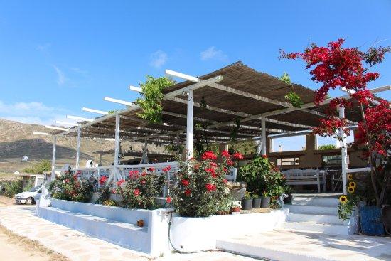 Mykonos Vioma Organic Farm