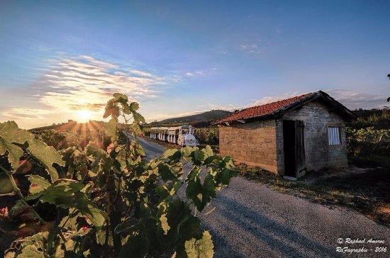 Tain-l'Hermitage, Frankrike: Le petit train stationné au milieu des vignes pendant une dégustation