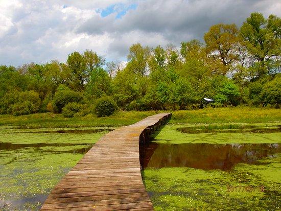 Saint-Amand-Montrond, France: l'étang