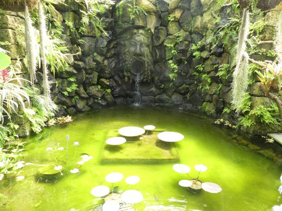 Les aloe vera picture of giardini la mortella forio tripadvisor - Giardino la mortella ...