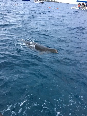 Sunlight on Water : The seal who came to see us. She was chewing on our mooring line at the beginning.