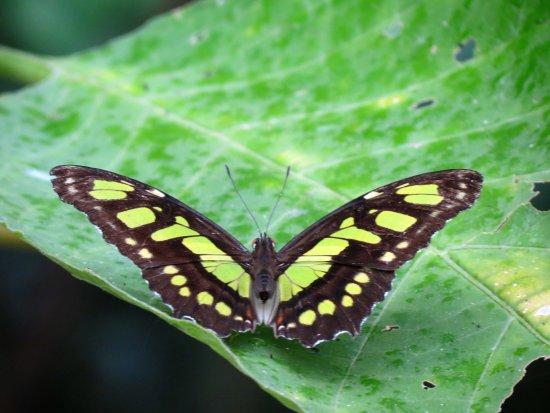 Monteverde Cloud Forest Reserve, Kosta Rika: IMG_3371_large.jpg