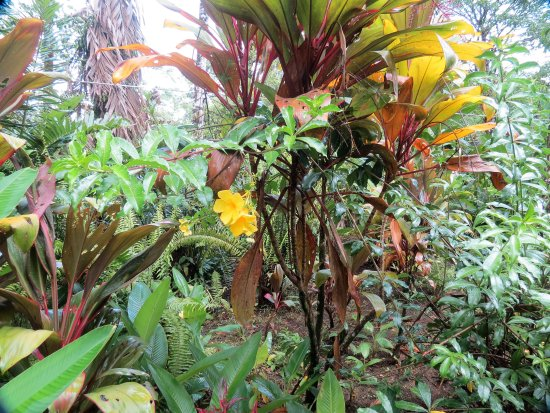 Monteverde Cloud Forest Reserve, คอสตาริกา: IMG_3366_large.jpg