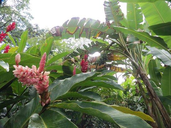 Monteverde Cloud Forest Reserve, คอสตาริกา: IMG_3367_large.jpg