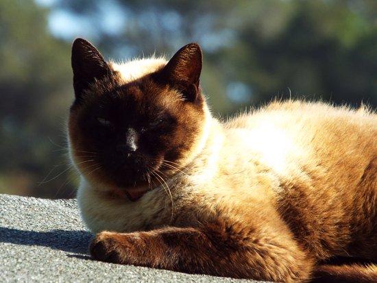 Quart, Spain: cat