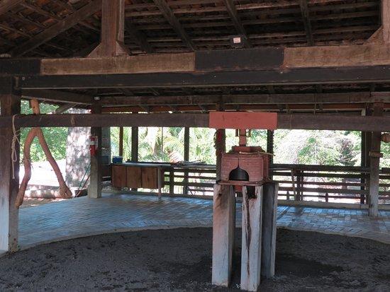 Province of Guanacaste, Costa Rica: IMG_3378_large.jpg