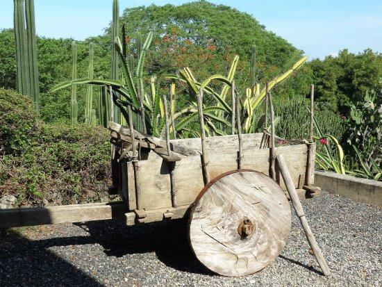 Province of Guanacaste, Costa Rica: IMG_3377_large.jpg