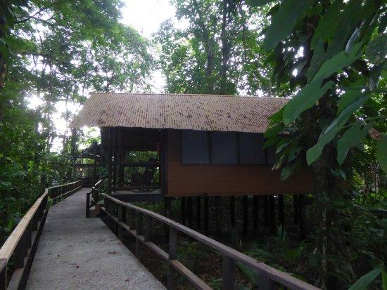 Rana Roja Lodge: Bungalow