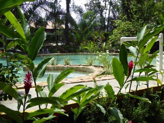 Rana Roja Lodge: Pool Rana Roja