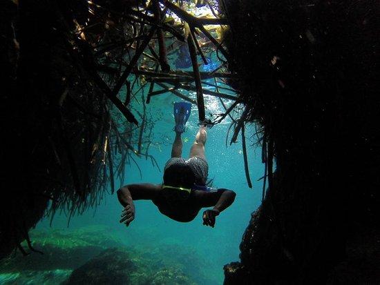 Manati Divers