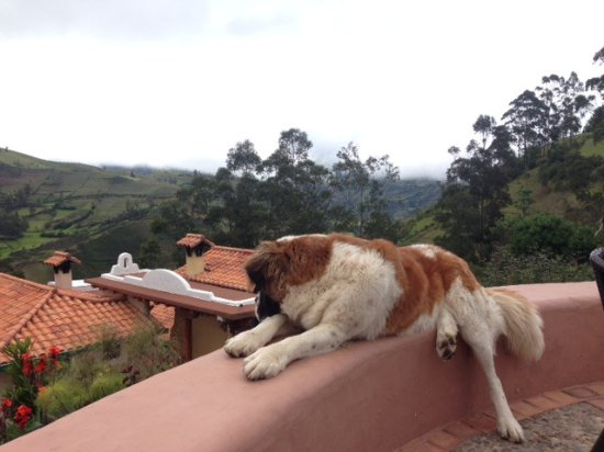 Isinlivi, Ecuador: the most lovely dog in the Quilotoa Loop