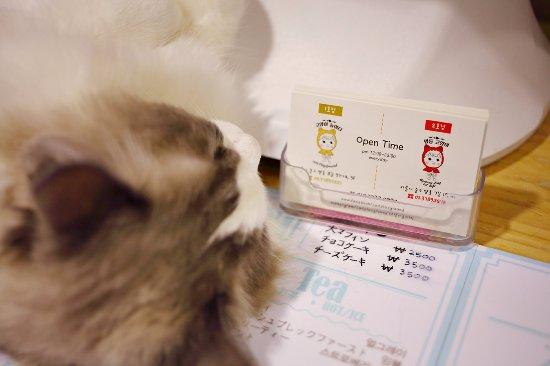 Cat Cafe Korea Address