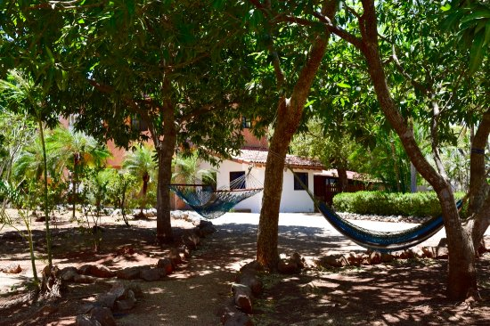 Playa Negra, คอสตาริกา: Hammocks around Casa Yoga