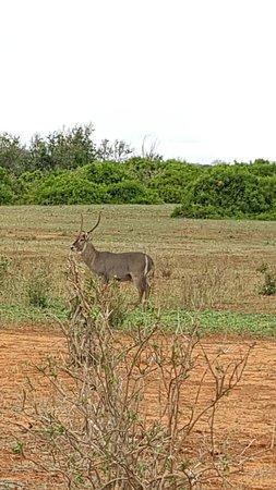 Tsavo, Kenia: IMG-20170510-WA0030_large.jpg