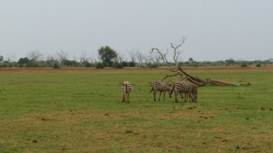 Tsavo, Kenia: IMG-20170510-WA0028_large.jpg