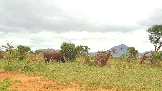 Tsavo, Kenia: IMG-20170510-WA0027_large.jpg