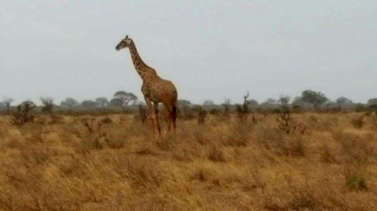 Tsavo, Kenia: IMG-20170510-WA0026_large.jpg
