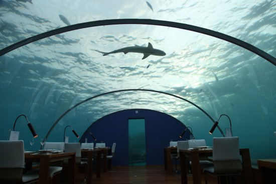 Ithaa undersea restaurant picture of conrad maldives for Ithaa prices