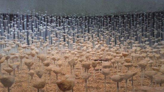 Centre-Val de Loire, Frankrike: Tres belle oeuvre de 5000 géodes de quartz dans les écuries...festival des jartins de Chaumont s