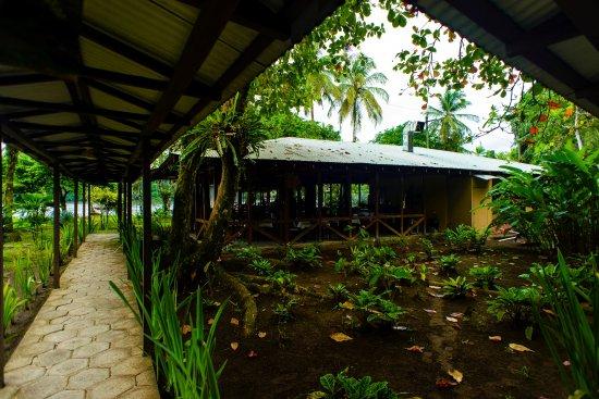 Manatus Hotel: Alrededores del hotel