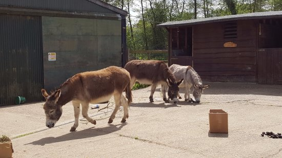 ‪‪Godalming‬, UK: Donkey courtyard‬
