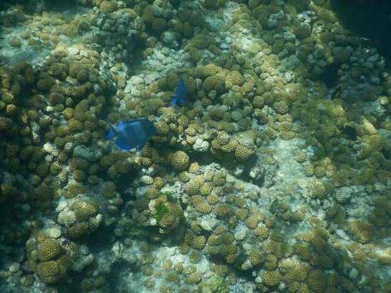 Looe Key Dive Center Picture