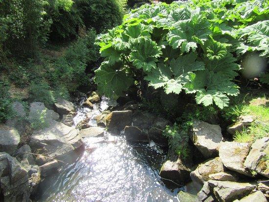Jardin du Conservatoire Botanique National de Brest : le petit ruisseau qui coule au milieu du parc.