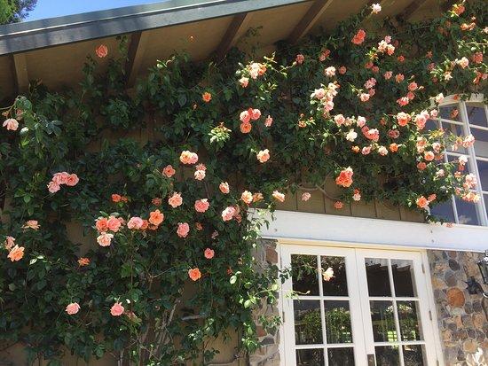 Geyserville, CA: photo2.jpg
