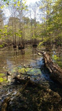 Jasper, تكساس: Walnut Ridge Unit Island Trail