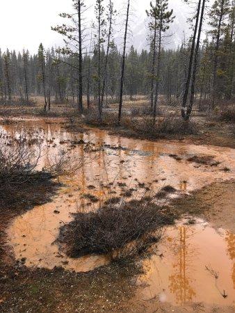 Kootenay National Park, Kanada: photo2.jpg