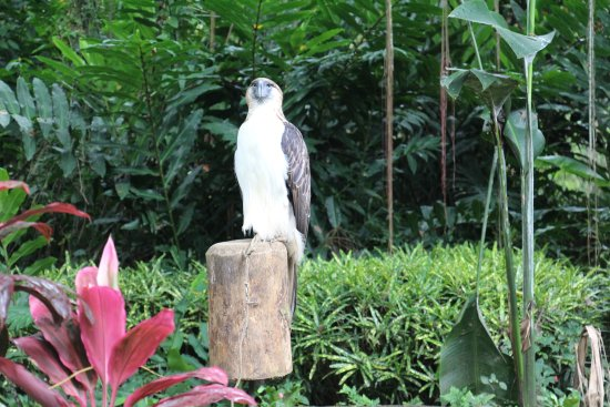 Davao City, Filipinas: an Eagle