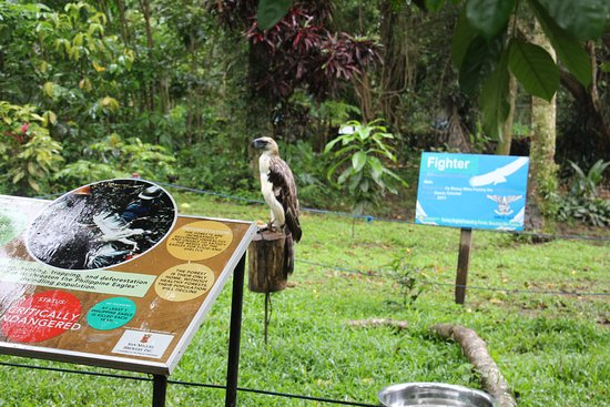 Davao City, Filipinas: one of the smaller eagles