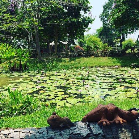 Baan Chai Thung: Lotus Pond