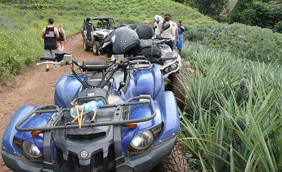 Moorea, French Polynesia: Albert ATV Tour pineapple plantation stop