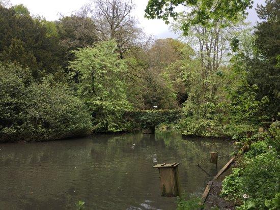 Busbridge, UK: photo3.jpg