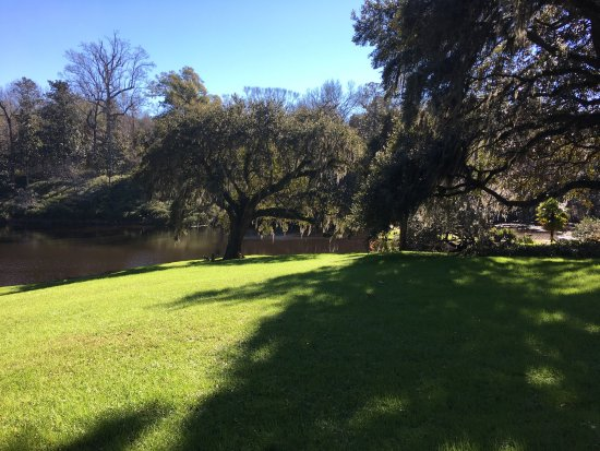 Middleton Place: This view would never get old