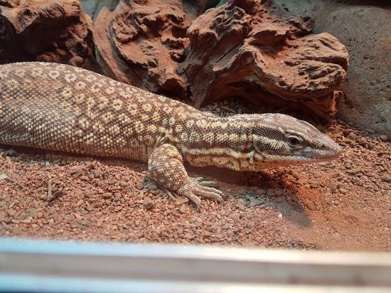 Yarmouth, UK: Isle of Wight Reptilarium