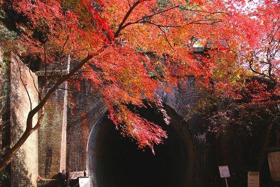 Chubu, Japan: 秋のトンネルはもみじが美しく色づきます。