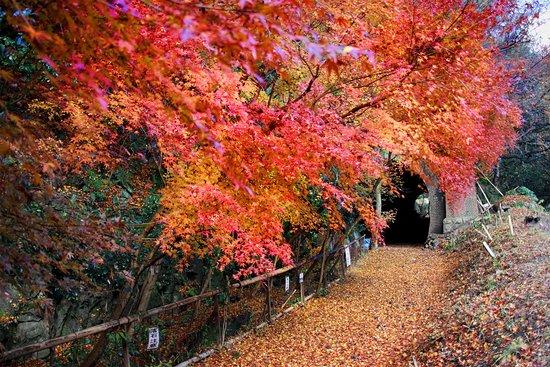 Aigi Tunnels