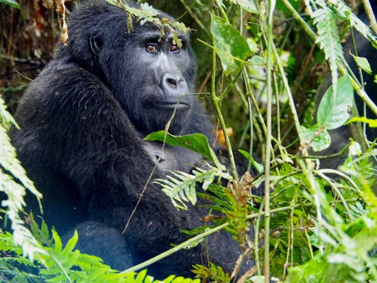 Kisoro, Uganda: photo5.jpg
