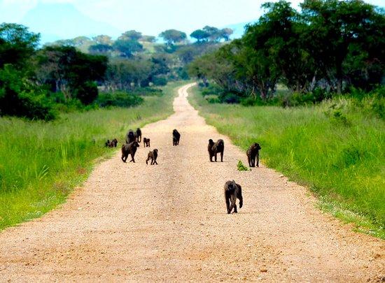 Kisoro, Oeganda: photo8.jpg