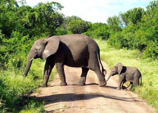 Kisoro, Oeganda: photo9.jpg