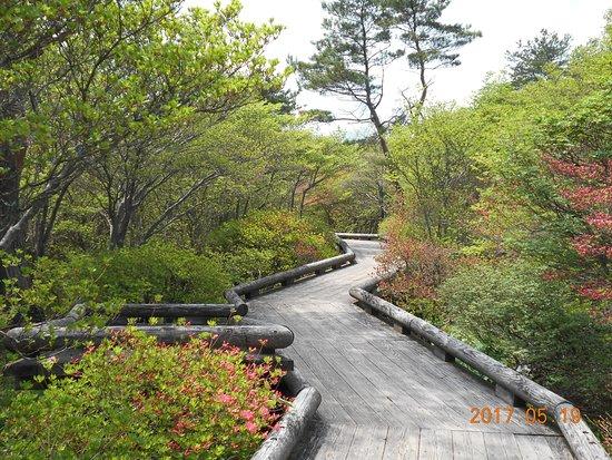 Yahata Park