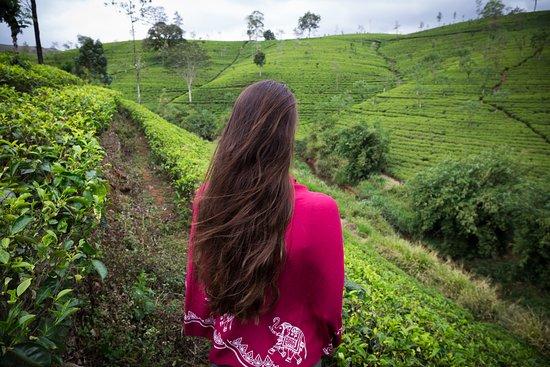 Ceylon Steps照片