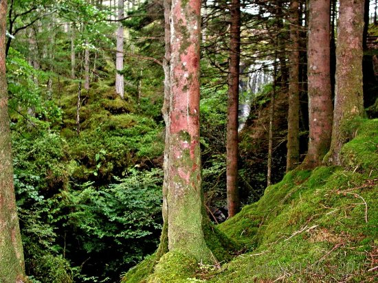 Gairloch, UK: Moss and ferns frame the falls in the distance