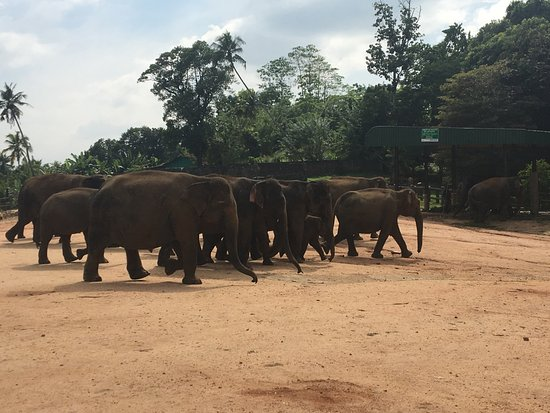 Mawanella, Sri Lanka: pinnawala elephant orphanage