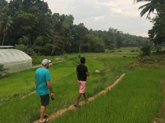 Mawanella, Sri Lanka : village walk