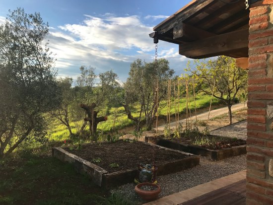 Petroio, Italy: Organic vegetable garden