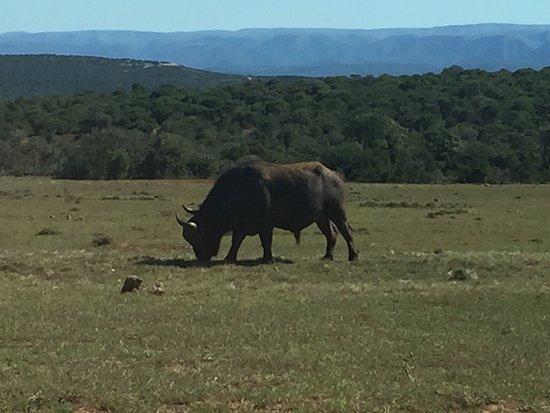 Addo, South Africa: photo6.jpg